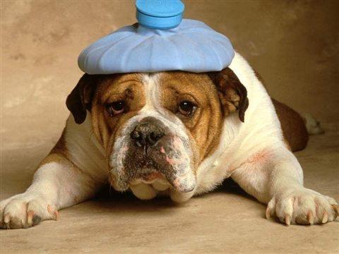 Combattere il mal di testa in modo naturale