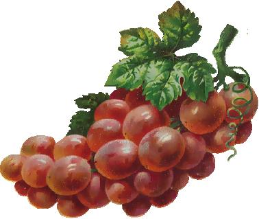 rossetto uva rossa bottega verde